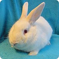 Adopt A Pet :: Rosebun - Los Angeles, CA