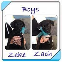 Adopt A Pet :: Zeke - Marlton, NJ