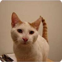 Adopt A Pet :: Milo - Cleveland, OH