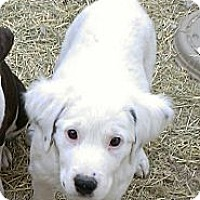 Adopt A Pet :: Raisin - Spring Branch, TX