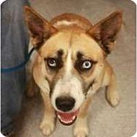 Adopt A Pet :: Mona - Arlington, TX