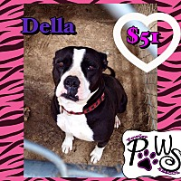 Pit Bull Terrier/Terrier (Unknown Type, Medium) Mix Dog for adoption in Fowler, California - Della