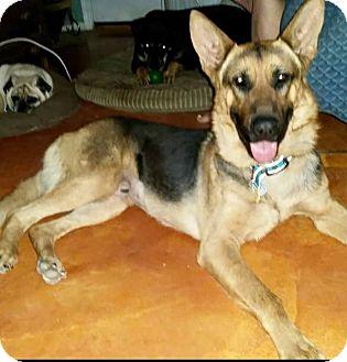 German Shepherd Dog Mix Dog for adoption in Phoenix, Arizona - Conrad