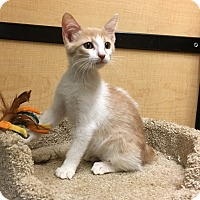 Adopt A Pet :: Liberty - Riverside, CA