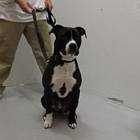 Adopt A Pet :: Lucky - Frenchburg, KY