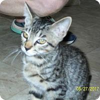 Adopt A Pet :: Ticker - Mexia, TX