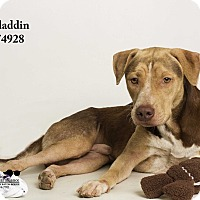 Adopt A Pet :: Aladdin - Baton Rouge, LA