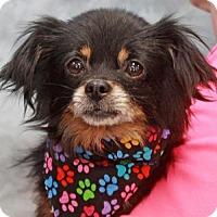 Adopt A Pet :: Hans - Garfield Heights, OH