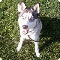 Adopt A Pet :: Chloe - Harvard, IL