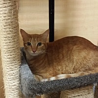 Adopt A Pet :: Skeeter - Whittier, CA