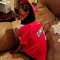 Adopt A Pet :: Dane - Richmond, KY