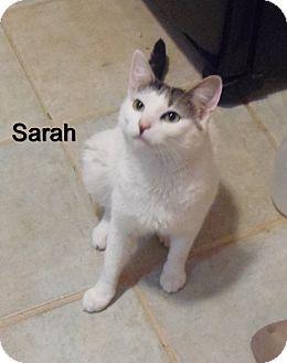 Domestic Mediumhair Cat for adoption in Catasauqua, Pennsylvania - Sarah