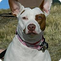 Adopt A Pet :: Missy - Cheyenne, WY