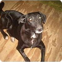 Adopt A Pet :: Annie - North Jackson, OH