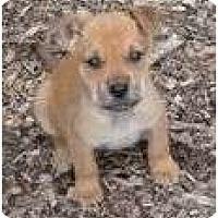 Adopt A Pet :: Blotch - Plainfield, CT