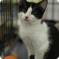 Adopt A Pet :: Figaro - Sacramento, CA