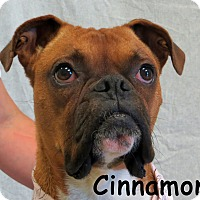 Adopt A Pet :: Cinnamon - Warren, PA