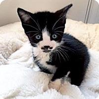 Adopt A Pet :: Andy Pandy 10 - Austin, TX