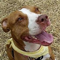 Adopt A Pet :: *CLOVER - Austin, TX