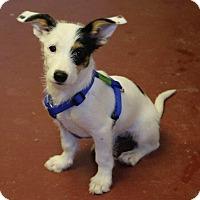 Adopt A Pet :: Tina Fey - Winters, CA