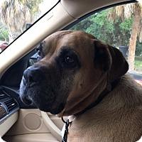 Adopt A Pet :: Rockie - Central & West Florida, FL