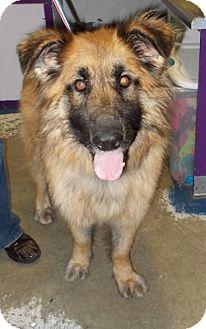 Shepherd (Unknown Type) Mix Dog for adoption in Bellingham, Washington - Dharma