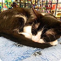 Adopt A Pet :: Charlie - The Colony, TX