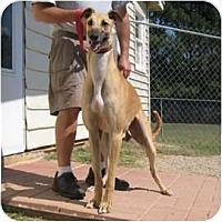 Adopt A Pet :: Mo - Oak Ridge, NC