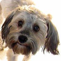 Adopt A Pet :: Lexi - Oakley, CA