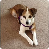 Adopt A Pet :: Sheena - Indianapolis, IN