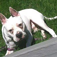 Adopt A Pet :: Pepper- Courtesy Listing - Fredericksburg, VA
