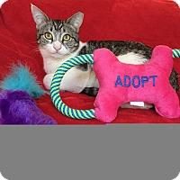 Adopt A Pet :: Smidge - Chandler, AZ