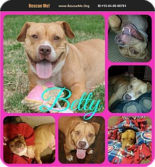 Pit Bull Terrier/Basset Hound Mix Dog for adoption in Ft Worth, Texas - Betty