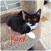 Adopt A Pet :: ROXY - Hamilton, NJ