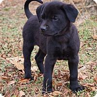 Adopt A Pet :: *Molly - PENDING - Westport, CT