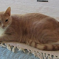 Adopt A Pet :: Tealc - Chandler, AZ