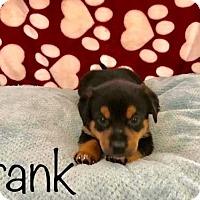 Adopt A Pet :: PP - Frank - Tucson, AZ