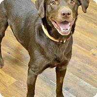 Adopt A Pet :: Dexter - Lake Odessa, MI