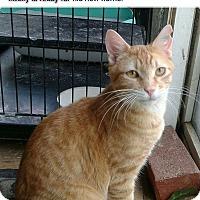 Adopt A Pet :: Antony - Lexington, MO
