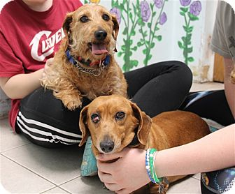 Dachshund Mix Dog for adoption in Elyria, Ohio - Laverne & Sofie
