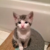 Adopt A Pet :: Paige - San Jose, CA