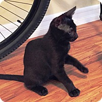 Adopt A Pet :: Bibb - Orange, CA