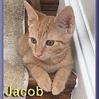 Adopt A Pet :: Jacob - Aldie, VA