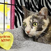 Adopt A Pet :: Gwen - College Station, TX
