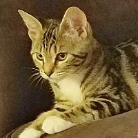 Adopt A Pet :: Jenny - Pleasanton, CA