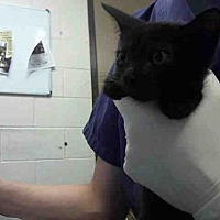 Adopt A Pet :: A291318 - Conroe, TX
