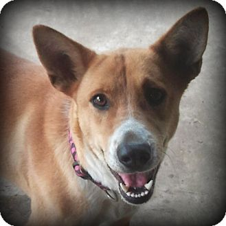 Shepherd (Unknown Type) Mix Dog for adoption in Weatherford, Texas - Emmy
