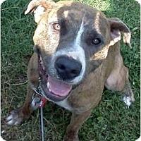 Adopt A Pet :: Kaylee - Nashville, TN