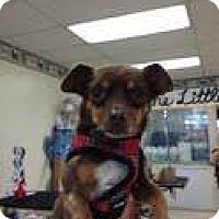 Adopt A Pet :: Rincon - Goleta, CA