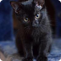 Adopt A Pet :: Riven - St. Louis, MO